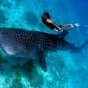 swim with whale sharks in the maldives